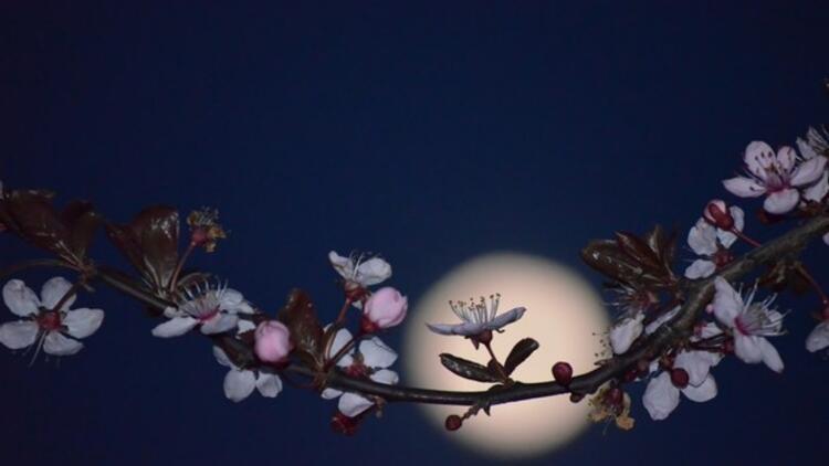 Bitkiler ay ışığıyla fotosentez yapamıyor mu?