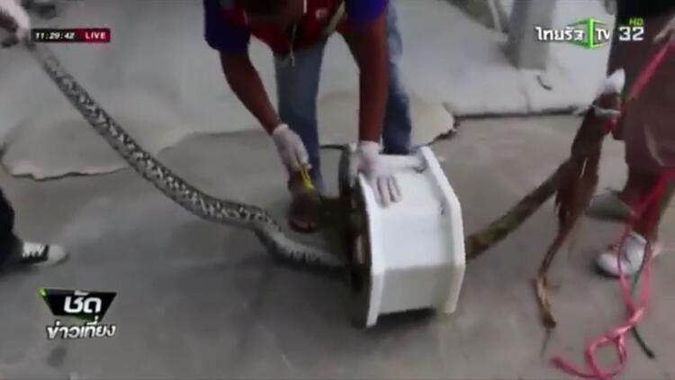 Tuvalette cinsel organını yılan kaptı!