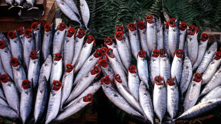 Sonbaharda bu balıklar yenir