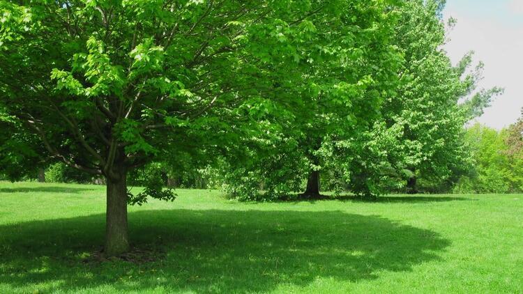 Ağaçların ne işe yaradığını anlatan 7 çok önemli bilgi