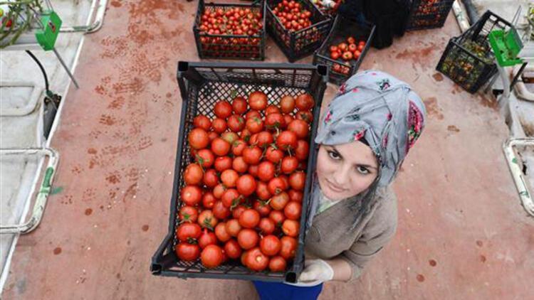 Son dakika... Türkiye'den ne zaman domates alacaklarını açıkladılar...