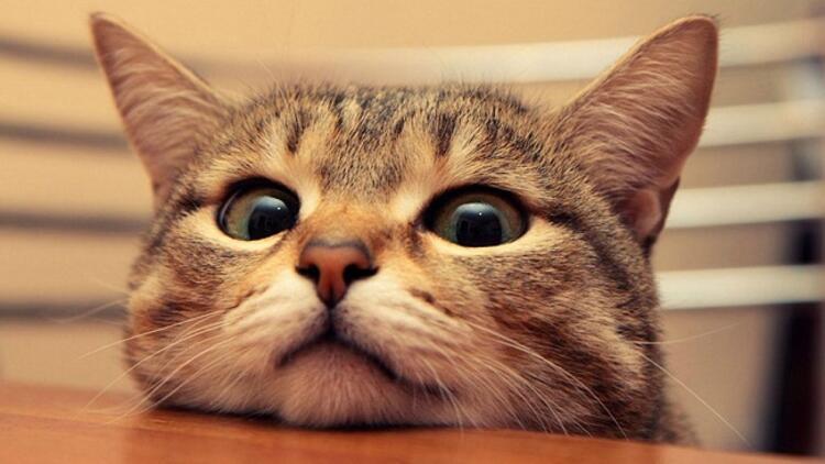"""""""Kedi"""" belgeseli bu defa sokak hayvanları için gösterimde"""