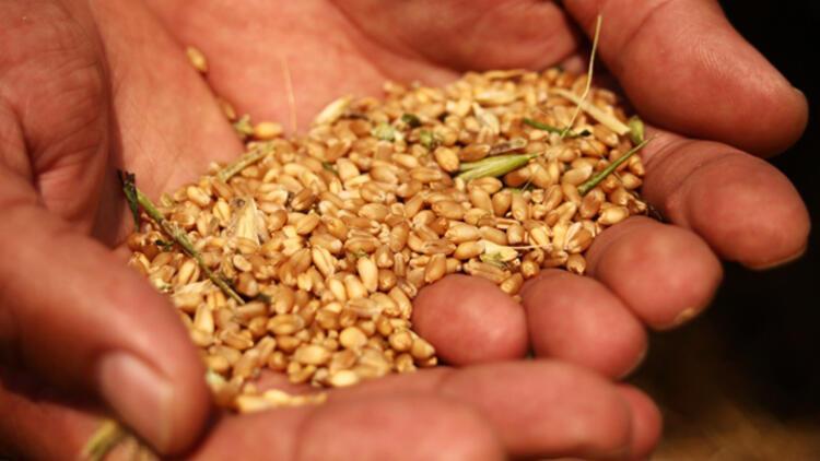 TMO 230 bin ton ekmeklik buğday ithal edecek