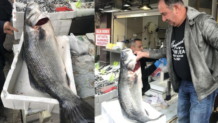 Karadeniz'den 25 kiloluk levrek çıktı