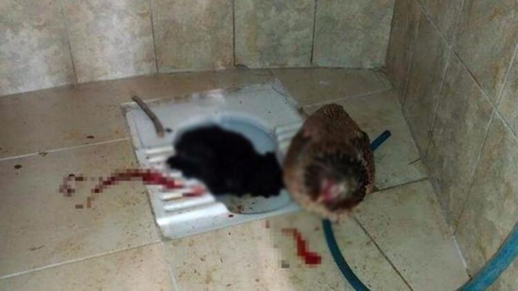 Mezarlık tuvaletinde korkunç olay! İçeri girdiğinde şoke oldu!