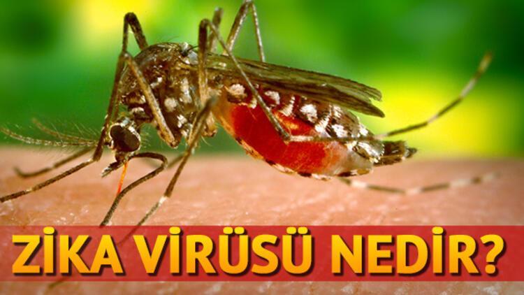 Zika virüsü nedir nereden bulaşır?