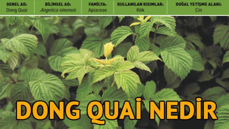 Dong Quai (Çin Melekotu) nedir, faydaları neler?