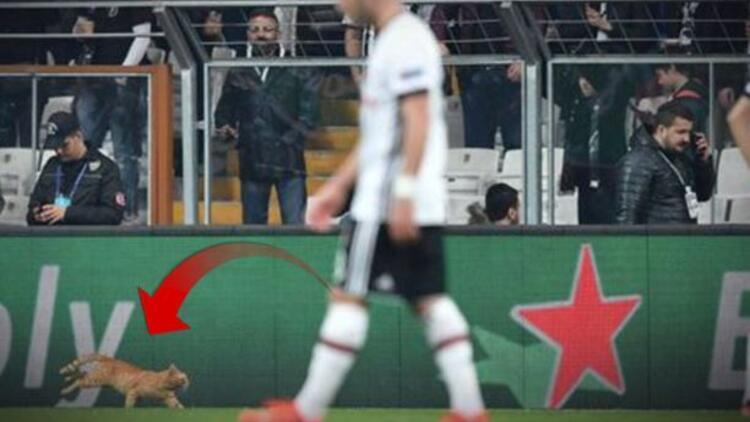 Beşiktaş - Bayern Münih maçına giren kedi İngiliz basının ve sosyal medyanın gündeminde