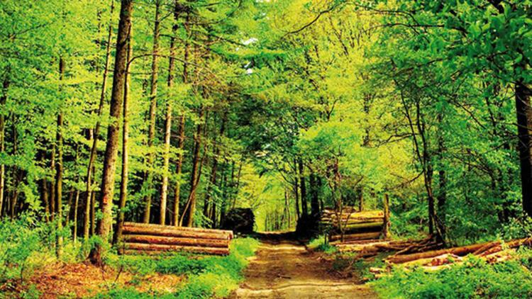 Orman tartışması