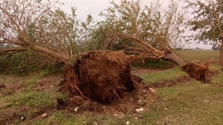 Zarar büyük: Ağaçları kökünden söken fırtına
