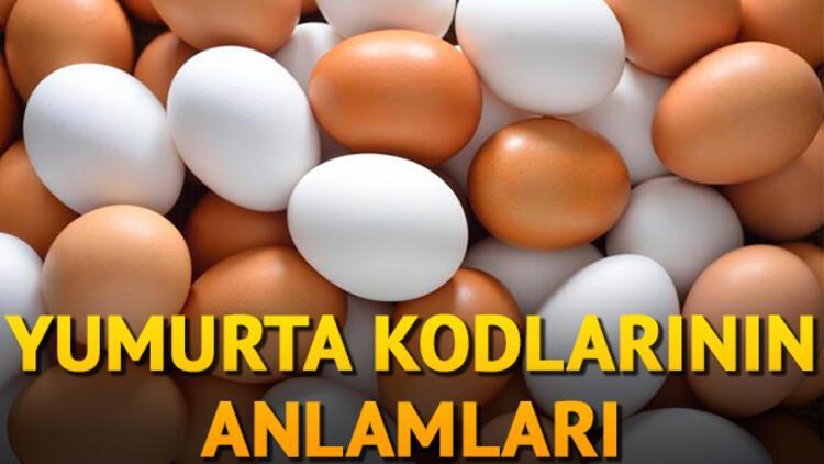 Yumurta kodları nelerdir? İşte Yumurta etiketindeki numaraların anlamları