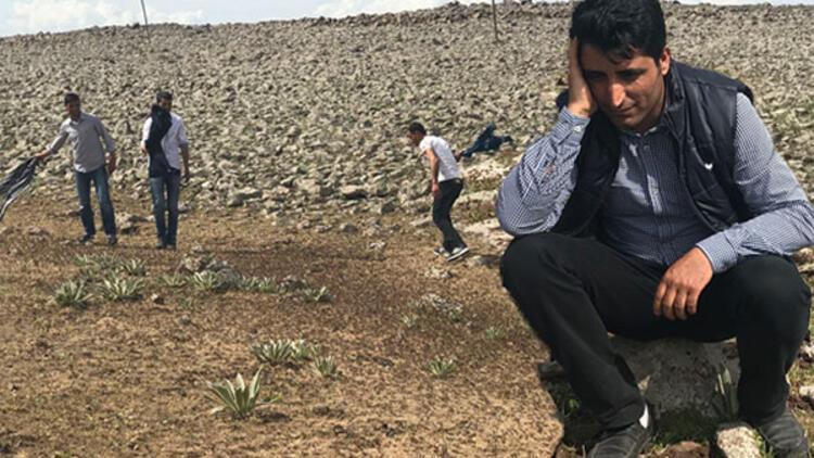 Çekirgeler ilçeyi istila etti Vatandaşlar yardım bekliyor