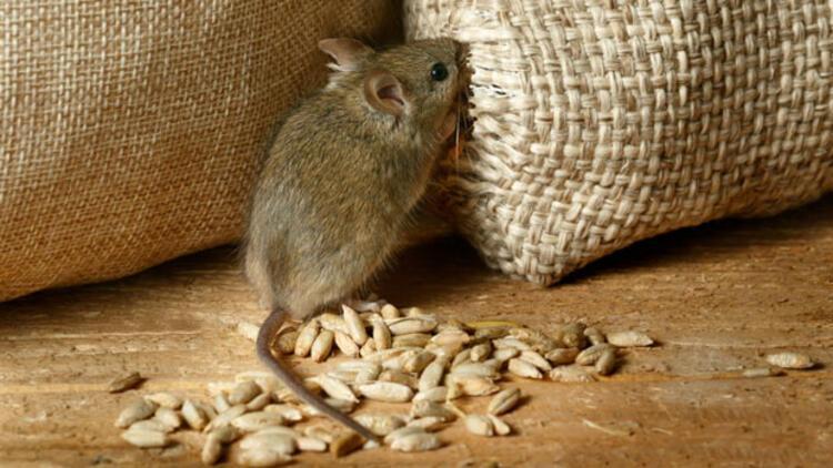 fare korunma yöntemleri ile ilgili görsel sonucu