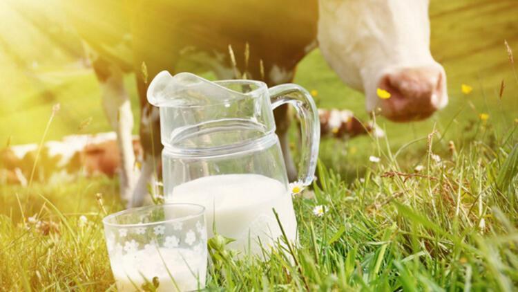 İnek sütü, inek yavrusu içindir