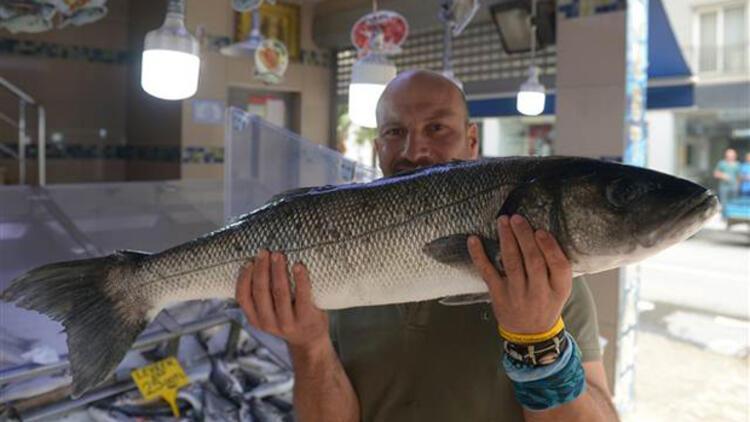 Kıyı balıkçısının yüzünü güldürdü! Kilosu 70 liradan 8 kilo...