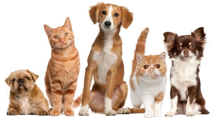 Kediler kaybolduklarında evin yolunu bulmayı nasıl başarıyorlar?