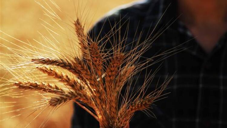 Tarım sigortası varlık bedeli 28 milyar lira