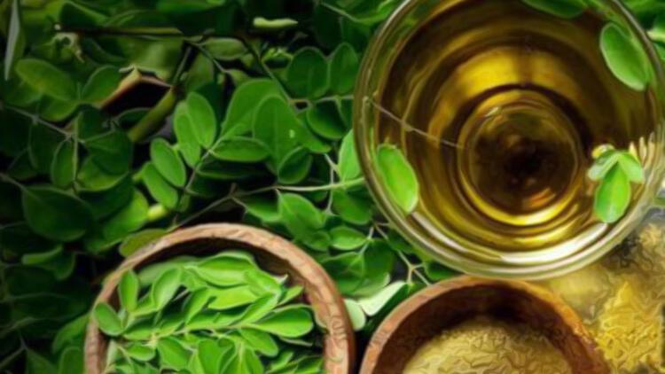 Moringa çayı nedir?