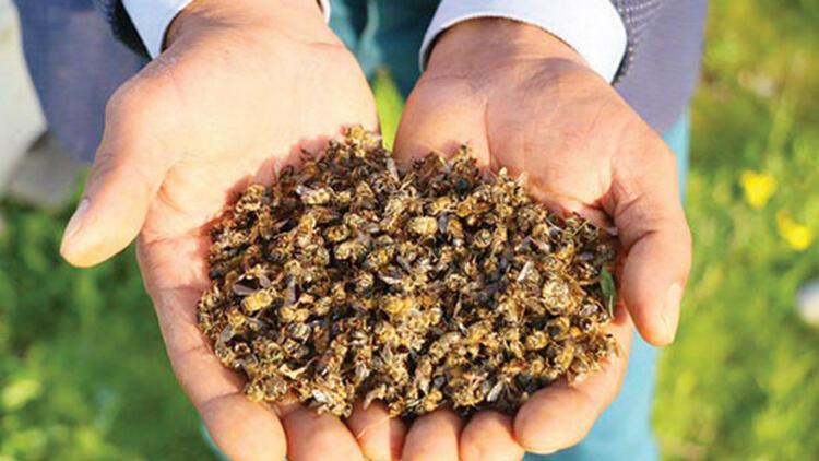 Arıcılar: Tarım ilaçları yasaklansın... Yılda 150 bin kovan ölüyor