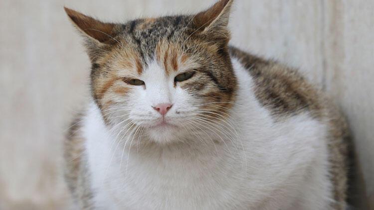 Eski seçim sandıkları kedi evi oluyor
