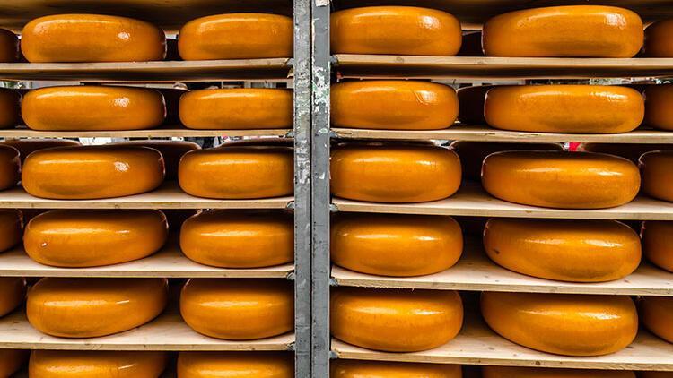 Dünyanın en iyi peyniri küçücük bir çiftlikte üretiliyor