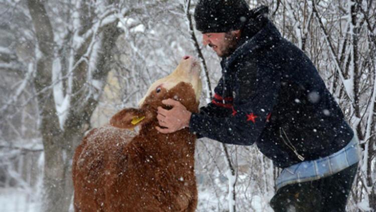 Üniversite öğrencisi harçlığını hayvancılık yaparak çıkarıyor