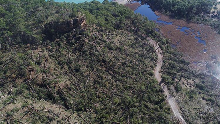 Buse'yi dereye savuran hortum antik kentte başlamış, 1500 ağacı devirmiş
