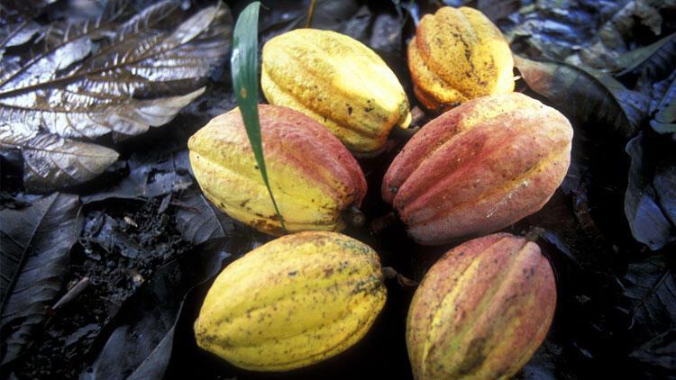 Kakao en çok kaybettiren emtia oldu