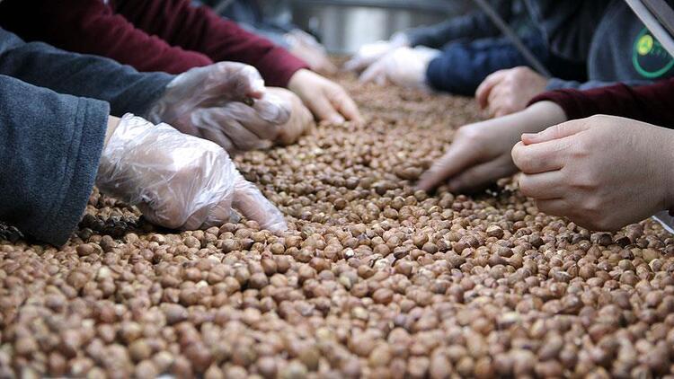 Türkiye'den 6 ayda 167 bin ton fındık ihraç edildi