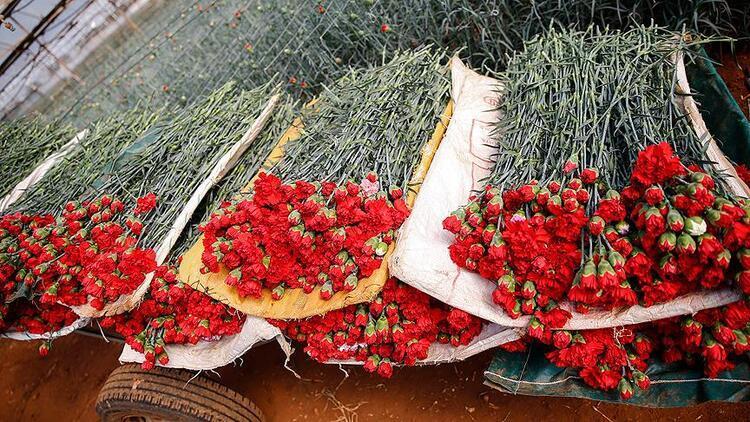Çiçek sektörü, İngilizlerin Anneler Günü'ne hazırlanıyor