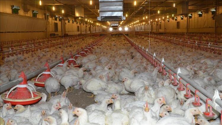 Kanatlı et sektörüne 50 milyon TL'lik destek
