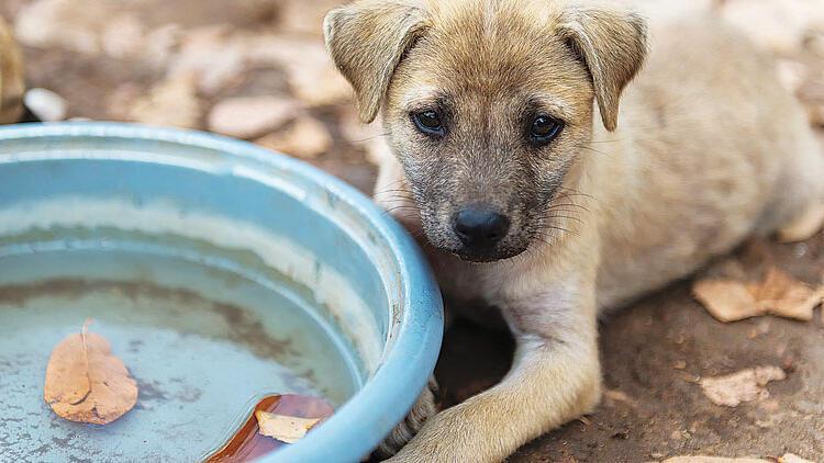 Dünya Sokak Hayvanları Gününde veterinerlerden öneri: 10 milyon can için  vergi - Son Dakika Haberleri İnternet