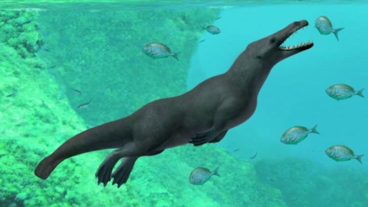 Peru'da 43 milyon yıllık balina fosili bulundu