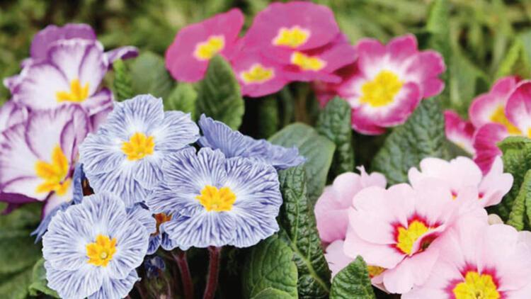 Anadolu çiçek açtı