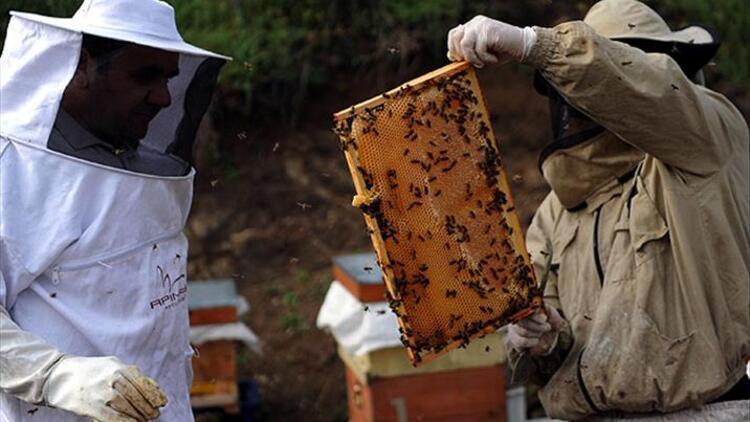 Arı sütünün faydaları neler?