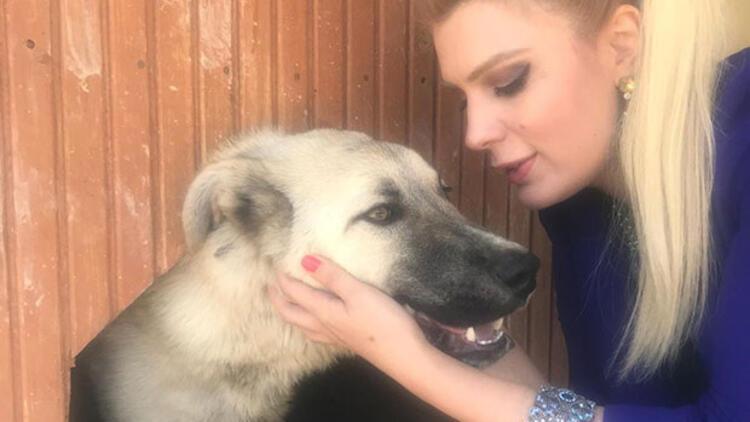 Çekicinin arkasına bağlanarak sürüklenen köpeğe avukat sahip çıktı