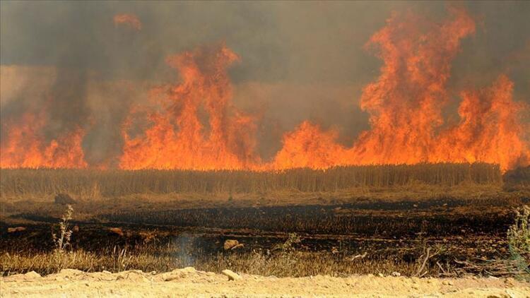 DEAŞ Irak'ta tarım arazilerini yakıyor