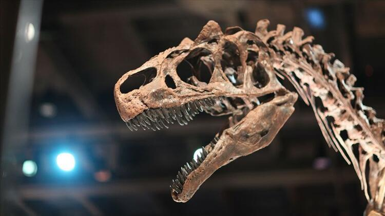 Tayland'da iki yeni dinozor türü keşfedildi