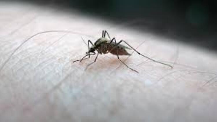 Sıtma hastalığı nedir, belirtileri neler? Sıtma bulaşıcı mı?