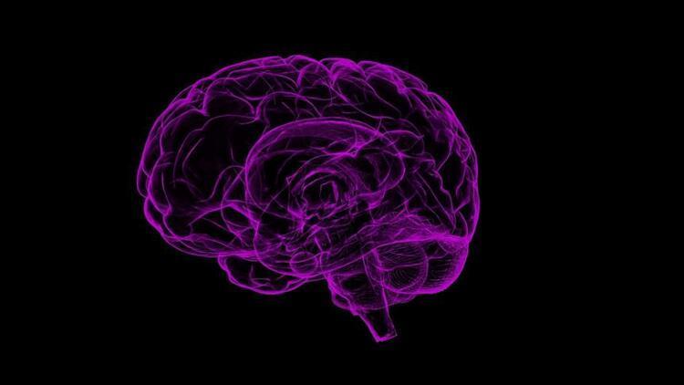 Amigdala nedir, amigdalanın işlevi nedir