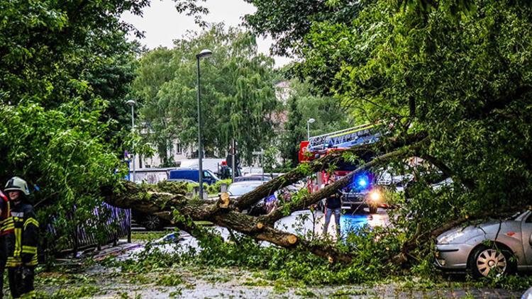 Düğün alayının üzerine ağaç devrildi: 11 kişi yaralandı