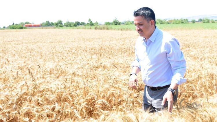 Bakan Pakdemirli, Büyükçekmece'de buğday hasadı yaptı