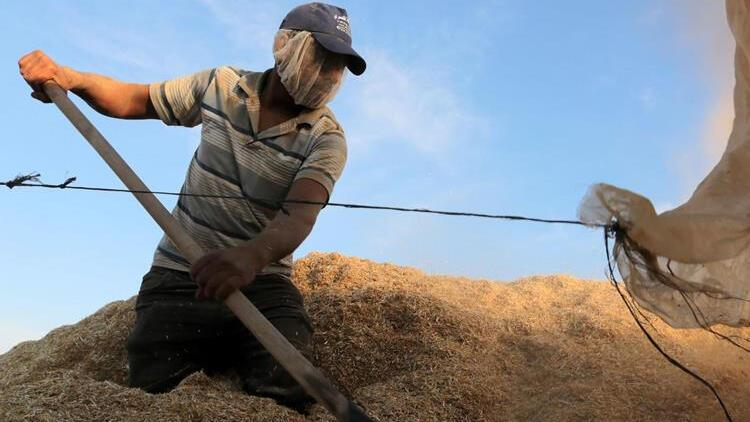 Olumsuz hava şartları Çukurova çiftçisini üzdü