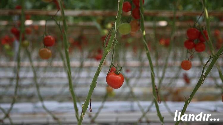 Organik gıda üretimi 800 milyon doları aştı