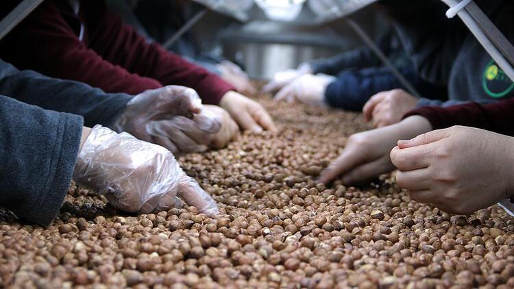 Ticaret borsalarında yaklaşık 314 bin ton fındık işlem gördü