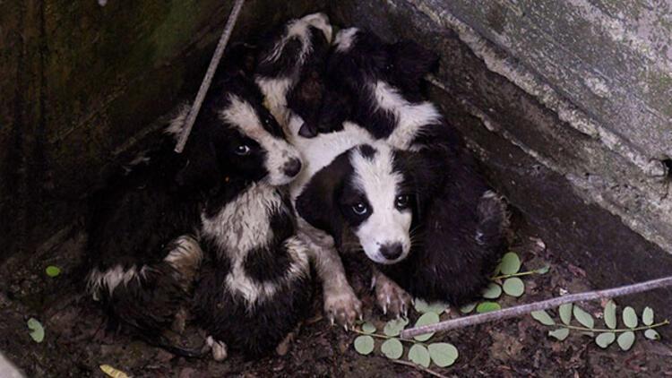 Su kanalına düşen yavru köpekler kurtarıldı