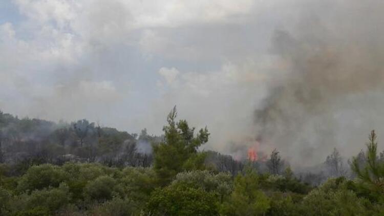 Son dakika... Milas'ta orman yangını çıktı