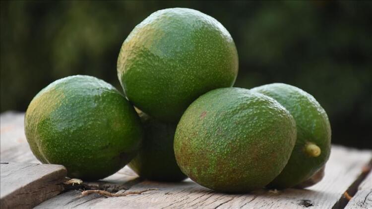 Antalya'dan Ukrayna'ya avokado ihracatı
