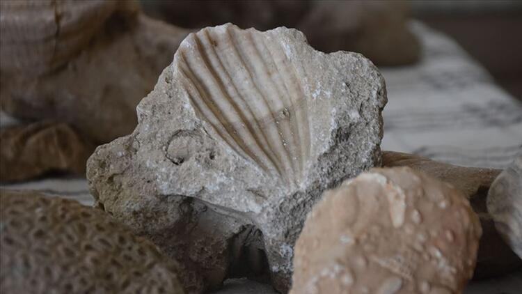 Adıyaman'da milyonlarca yıllık fosiller bulundu