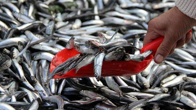 Balıkçılar hamsi, çinekop ve istavritten umutlu